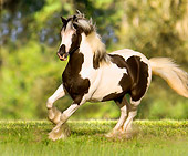 HOR 01 MB0034 01
