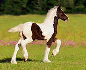 HOR 01 MB0035 01
