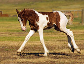 HOR 01 MB0036 01