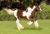 HOR 01 MB0038 01