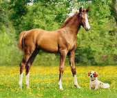 HOR 01 MB0040 01