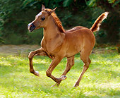 HOR 01 MB0041 01