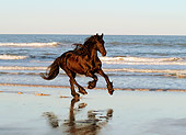 HOR 01 MB0043 01