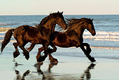 HOR 01 MB0044 01