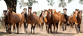 HOR 01 MB0046 01