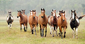 HOR 01 MB0047 01