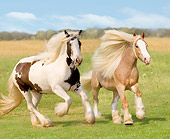 HOR 01 MB0049 01