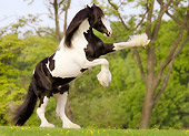 HOR 01 MB0053 01