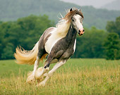 HOR 01 MB0056 01