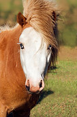 HOR 01 MB0057 01