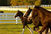 HOR 01 MB0058 01