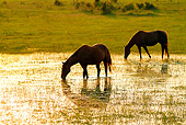 HOR 01 MB0060 01