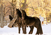 HOR 01 MB0061 01
