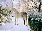 HOR 01 MB0062 01