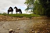 HOR 01 MB0063 01