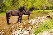 HOR 01 MB0064 01