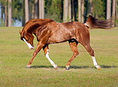 HOR 01 MB0067 01