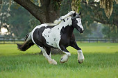 HOR 01 MB0069 01
