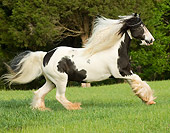 HOR 01 MB0070 01