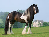 HOR 01 MB0075 01