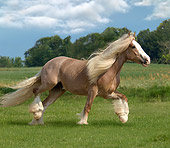 HOR 01 MB0078 01
