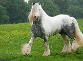 HOR 01 MB0079 01