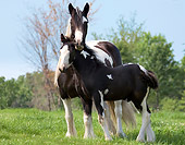 HOR 01 MB0082 01