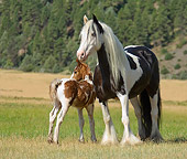 HOR 01 MB0084 01