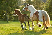 HOR 01 MB0088 01