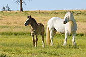 HOR 01 MB0090 01