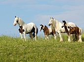 HOR 01 MB0092 01