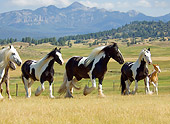 HOR 01 MB0093 01