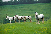 HOR 01 MB0094 01