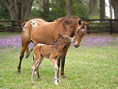 HOR 01 MB0101 01