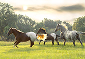 HOR 01 MB0103 01