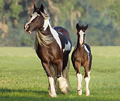 HOR 01 MB0107 01