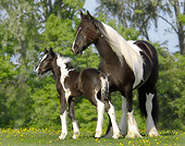 HOR 01 MB0111 01