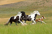 HOR 01 MB0114 01