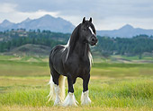 HOR 01 MB0116 01