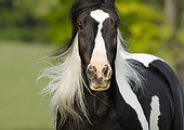 HOR 01 MB0119 01