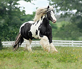 HOR 01 MB0123 01
