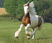 HOR 01 MB0127 01