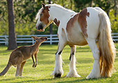 HOR 01 MB0128 01