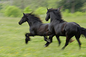 HOR 01 MB0131 01
