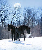 HOR 01 MB0132 01