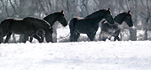 HOR 01 MB0133 01
