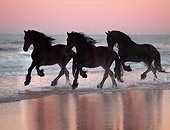 HOR 01 MB0134 01