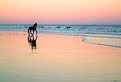 HOR 01 MB0135 01