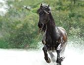 HOR 01 MB0136 01