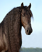 HOR 01 MB0137 01